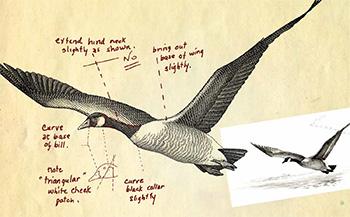 La série Les oiseaux du Canada (1986)