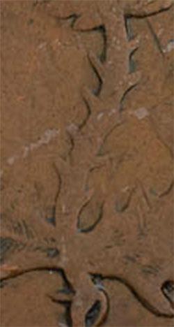 Nouvelle-Écosse - Province - 1/2 penny 1843 - 10 épines